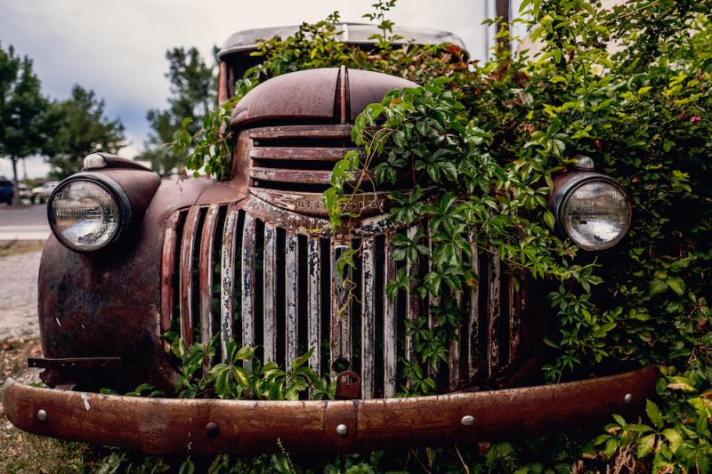 Car with shrubs growing inside
