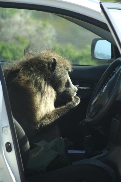 Not yet developed: technology to manage animal-vehicle invasions. (Flickr/ tim ellis)